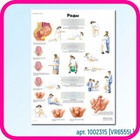 Плакат медицинский РОДЫ